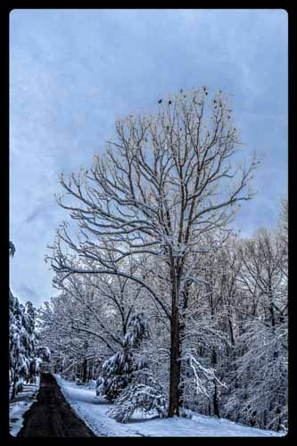 7-Surreal tree